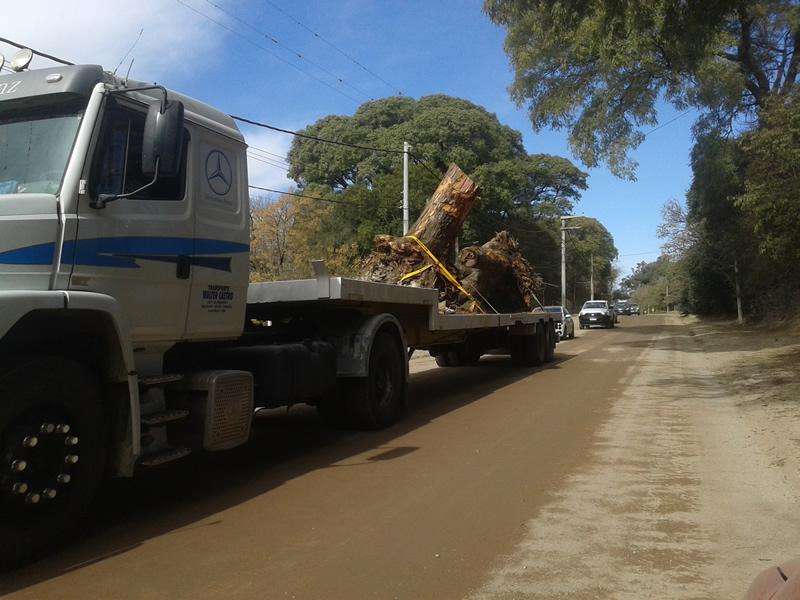 Extracción de árboles en Sinsacate